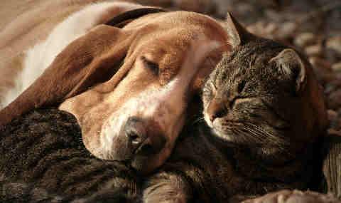 Lärmgutachten Zürich Tierpension Hundegebell - dBAkustik